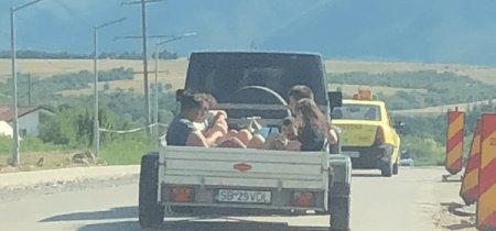 Șoferul filmat cu remorca plina de copii, pe o strada din Sibiu, nu a fost inca identificat