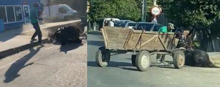 Un barbat Dolj a fost surprins in timp ce isi lovea dur calul prabusit pe asfalt. Politia i-a deschis dosar penal