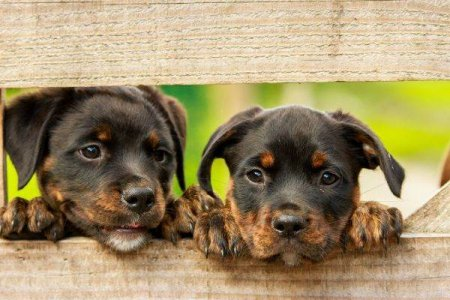 <span style='background:#EDF514'>CONSILIUL JUDETEAN</span> Ilfov a lansat o platforma pentru adoptia animalelor fara stapan