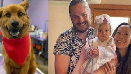 Doi tineri soti, fiica lor de un an, dar si cainele familiei, gasiti morti intr-un parc din cauza unor alge