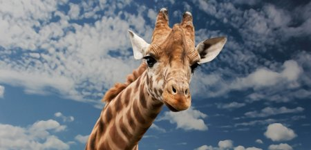 K<span style='background:#EDF514'>ENYA</span> realizeaza cel mai amplu recensamant de animale din toate timpurile