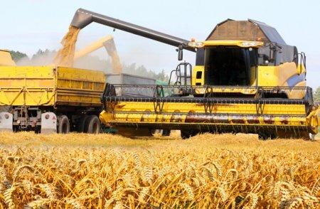 Veniturile producatorului de cereale si seminte Agroind Cauaceu din Bihor s-au apropiat de 100 mil. euro in 2020