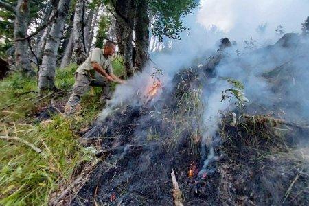 Incendiu de padure in Muntii Capatanii. Patru hectare de copaci tineri au fost cuprinse de flacari