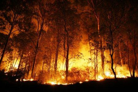 Ard muntii in Romania! Pompierii se lupta cu flacarile. Nu au reusit sa stinga incendiul nici acum