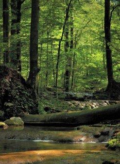 ROMSILVA: Peste 2.000 de hectare de paduri de stat au fost incluse in Catalogul National al Padurilor Virgine si Cvasivirgine