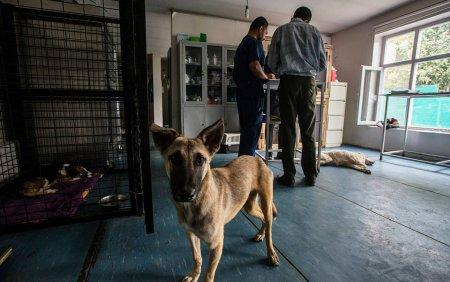 Londra va evacua sute de caini si pisici din Kabul