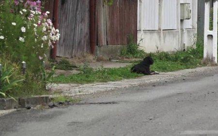 Un caine din Mures isi asteapta de doi ani stapanul in fata curtii. Omul a murit fulgerator