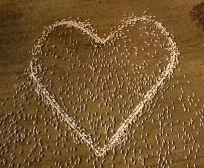"Gestul impresionant devenit viral al unui fermier in memoria matusii: ""Am creat o inima pentru ea"""