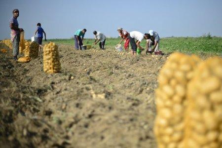 Raluca Andreica, Patria Credit: Peste 1 milion de producatori agricoli mici si foarte mici au nevoie de <span style='background:#EDF514'>MICROFINANTARE</span> pentru a creste