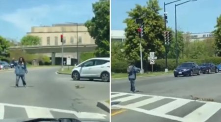 VIDEO O ratusca si puii ei, ajutati sa traverseze o strada aglomerata. Clipul, viral pe Twitter