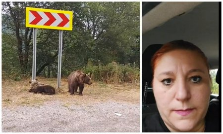 Diana Șosoaca, intalnire cu ursii pe <span style='background:#EDF514'>TRANSFAGARA</span>san: Sunt periculosi chiar daca sunt mici