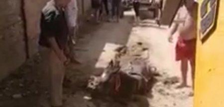 Imagini revoltatoare cu un cal <span style='background:#EDF514'>INGHITIT</span> de pamant. Sunteti nebuni, asa faceti voi lucrarile? VIDEO