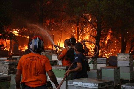 Pierderi majore pentru <span style='background:#EDF514'>APICULTORI</span>i greci din cauza incendiilor. Padurea din insula Evia se va reface in circa 30 de ani