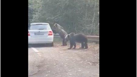 O femeie a fost atacata de un urs pe care incerca sa-l fotografieze pe <span style='background:#EDF514'>TRANSFAGARA</span>san