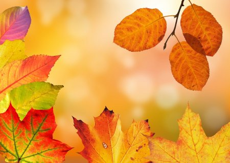 Cum va fi vremea in septembrie. Toamna incepe cu temperaturi mai scazute decat cele specifice perioadei