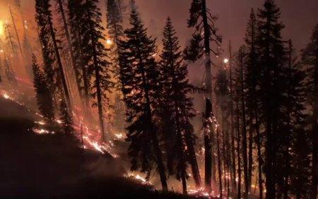 Continua incendiile de vegetatie in Statele Unite. Focar urias la granita statelor <span style='background:#EDF514'>CALIFORNIA</span> si Nevada
