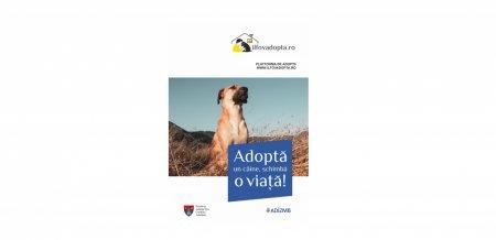 Vesti bune pentru iubitorii de animale! Pe www.ilfovadopta.ro iti poti face un prieten pe viata
