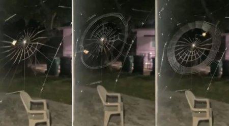 Cum se tese o panza de paianjen? Clipul, viral pe Twitter