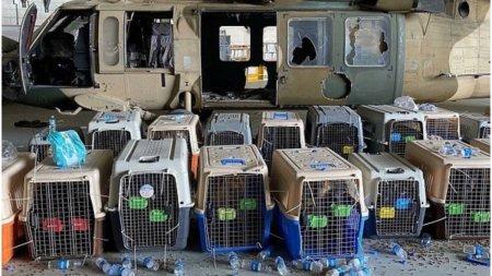 SUA au lasat in urma nu doar echipamente si vehicule, ci si 200 de caini utilitari: Le-au semnat sentinta la moarte
