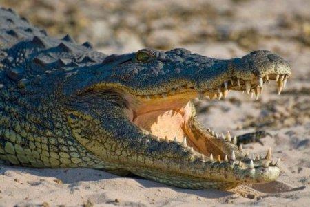 Un american a fost atacat de un aligator pe o strada inundata in urma uraganului Ida