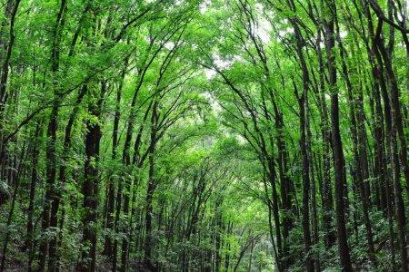 Cel putin o treime dintre speciile de copaci din intreaga lume sunt amenintate cu disparitia