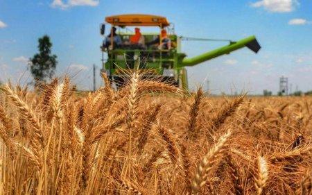 FAO: Preturile alimentelor au urcat in august; estimarile privind productia mondiala de cereale au fost inrautatite
