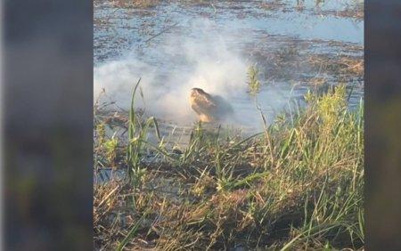 VIDEO Un aligator s-a transformat in dragon dupa ce a muscat o drona care se afla in zbor