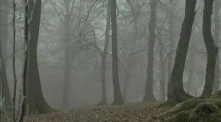 Experienta unei jurnaliste britanice, dupa ce s-a plimbat noaptea prin Hoia Baciu, cea mai infricosatare padure din Transilvania