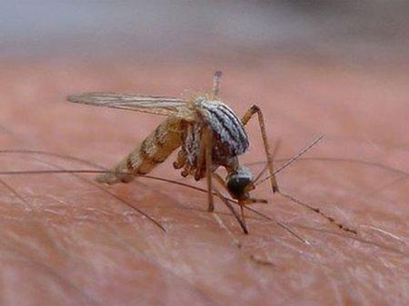 Este oficial: Primul caz de deces provocat de virusul <span style='background:#EDF514'>WEST</span> Nile in Romania. Pana in prezent au fost inregistrate 4 cazuri de infectie