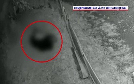 S-a dat alarma pe Valea Dambo<span style='background:#EDF514'>VITEI</span>. Un urs a fost filmat in timp ce sfasia o oaie intr-o curte