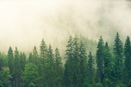 Horia Baciu, cea mai infricosatoare padure din Transilvania