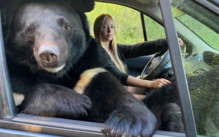 O tanara din Rusia calatoreste in masina cu un urs <span style='background:#EDF514'>HIMALAYA</span>n pe locul pasagerului din dreapta