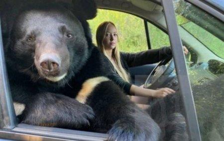 O tanara din Rusia, surprinsa in timp ce calatoreste in masina cu un urs pe locul din dreapta