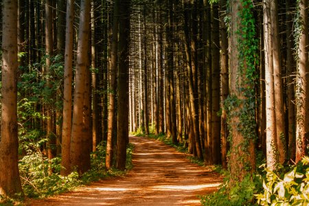 Cum este afectat mediul de dezintegrarea lemnului? Sunt eliberate 10,9 gigatone de carbon
