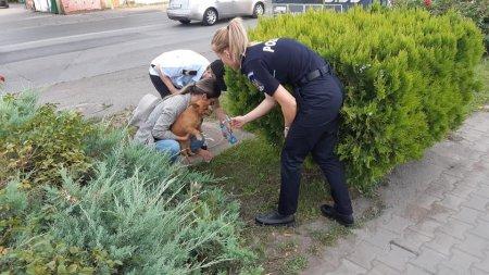 Politia Capitalei: Abandonul animalelor atinge cote alarmante