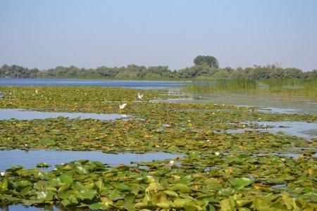 O excursie fantastica in Delta Dunarii
