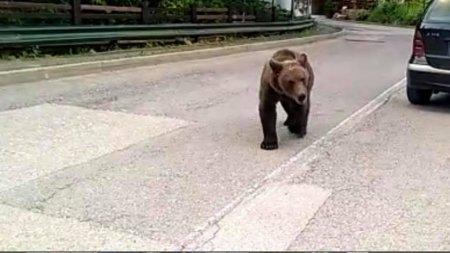 Urs gasit impuscat si transat in Neamt. Politia a deschis un dosar penal