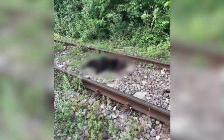 O ursoaica si <span style='background:#EDF514'>PUIUL</span> ei, loviti mortal de un tren, in judetul Dambovita. Impactul nu a putut fi evitat