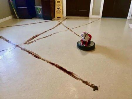 iRobot Roomba j7+ este primul aspirator robot sigur de folosit in preajma animalelor de companie