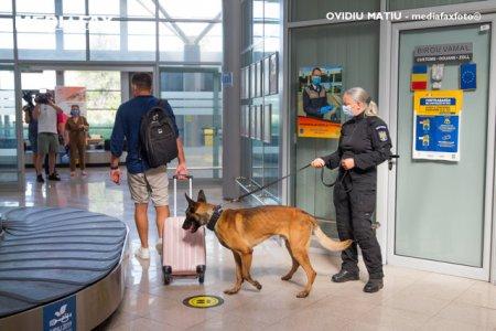 Cainii care miros COVID vor fi trimisi si pe Aeroportul International din Cluj