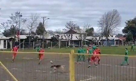 Imagini inedite: Un <span style='background:#EDF514'>CAINE</span> a marcat un gol, intr-un meci de fotbal din Chile