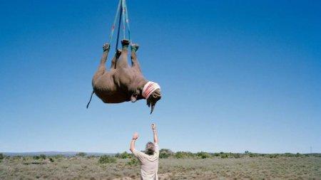 Premiile Ig Nobel. Un rinocer agatat cu capul in jos de un <span style='background:#EDF514'>ELICOPTER</span> a spulberat concurenta
