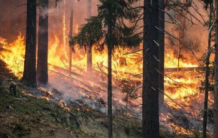Alerta de calatorie in Spania. Incendiu de <span style='background:#EDF514'>VEGETATIE</span> forestiera in Malaga