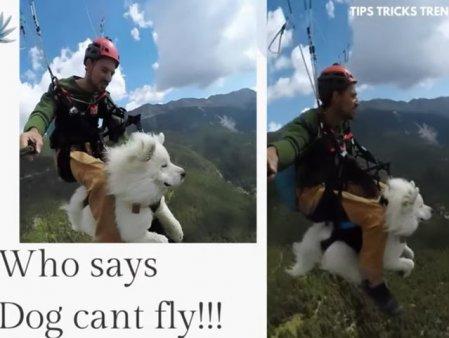 Si cainii pot zbura! Cat de incantat este un samoyed de prima sa excursie cu parapanta deasupra muntilor. VIDEO viral