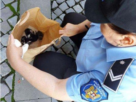Un bucurestean a fost amendat cu 3.000 de lei pentru ca a abandonat 5 pui de pisica pe strada