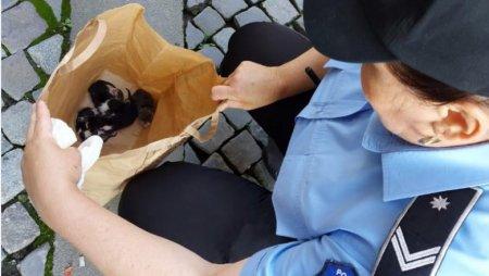 Un barbat care a aruncat cinci pui de pisica, intr-o punga, pe o strada din Capitala, a fost amendat cu 3.000 de lei