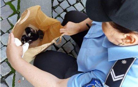 Un barbat care a abandonat cinci pui de pisica pe o strada din Capitala a fost amendat cu 3.000 de lei