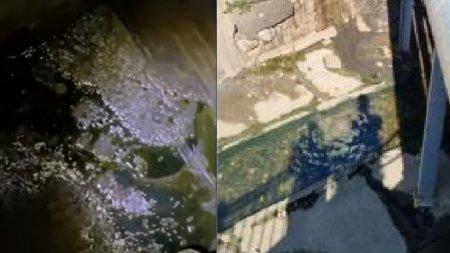 Turistii dintr-o statiune balneara au sunat la 112 dupa ce au observat produse <span style='background:#EDF514'>PETROL</span>iere in paraul care traverseaza zona