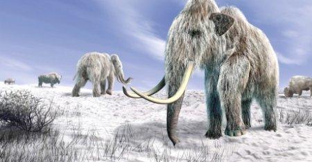 Oamenii de stiinta sunt gata sa reinvie mamutul lanos, disparut in urma cu 4000 de ani. Investitia - 15 milioane de dolari
