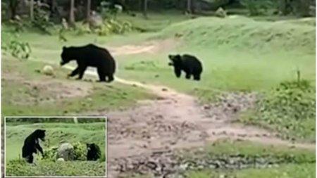 O ursoaica fura mingea de fotbal a unor copii, pentru a-si distra ursuletul cu ea